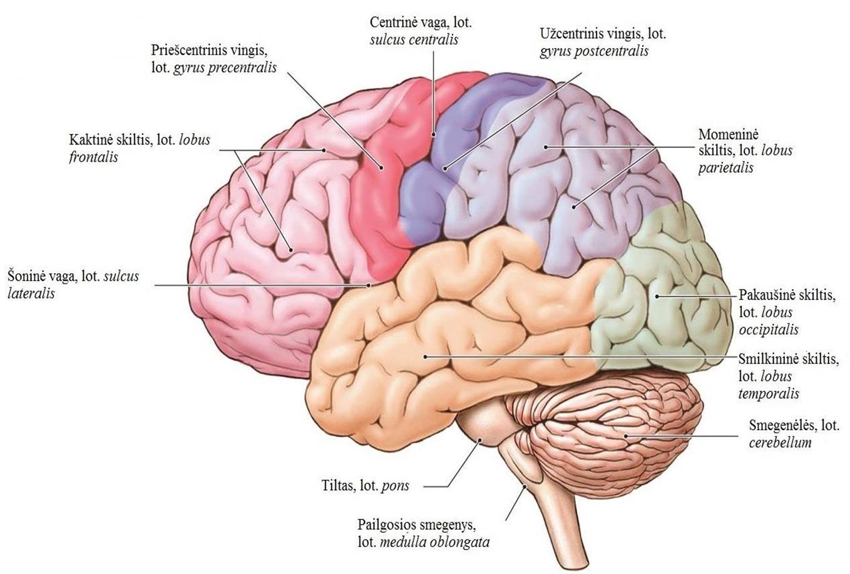 smegenų prekybos sistema 7 0 pasirinkimo strategijos com